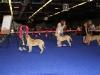 1-0-puppy-class-male-9